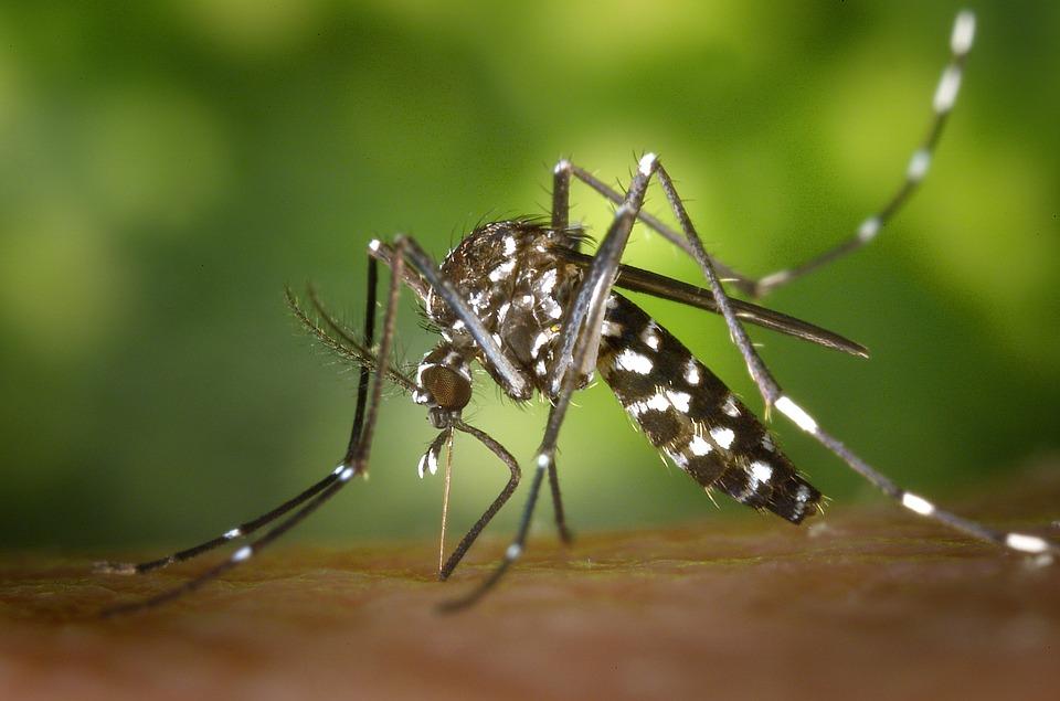 antimückenarmband