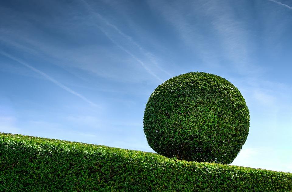 algenkalk gegen buchsbaumzünsler